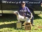 Mickey wins Dave Fletcher Shooting Dog Classic in Michigan